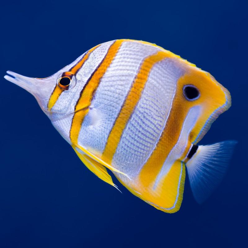 Maintenance Free Fish Tank Glasgow Aquarium Design Centre Aquarium And Pond Suppliers In