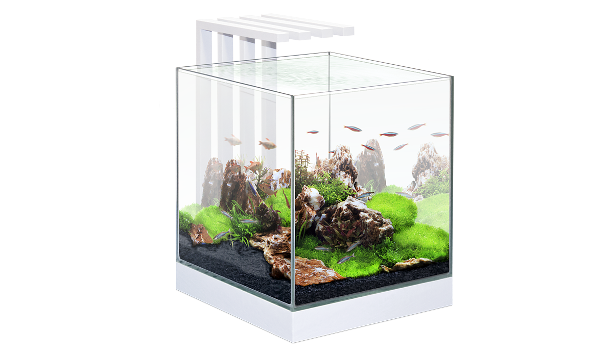 Ciano Nexus Pure 25 Waterworld Aquatics
