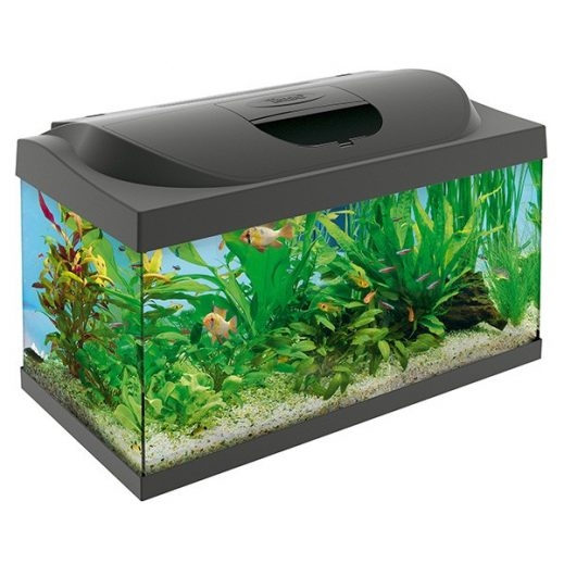 Kids Aquariums Archives Waterworld Aquatics