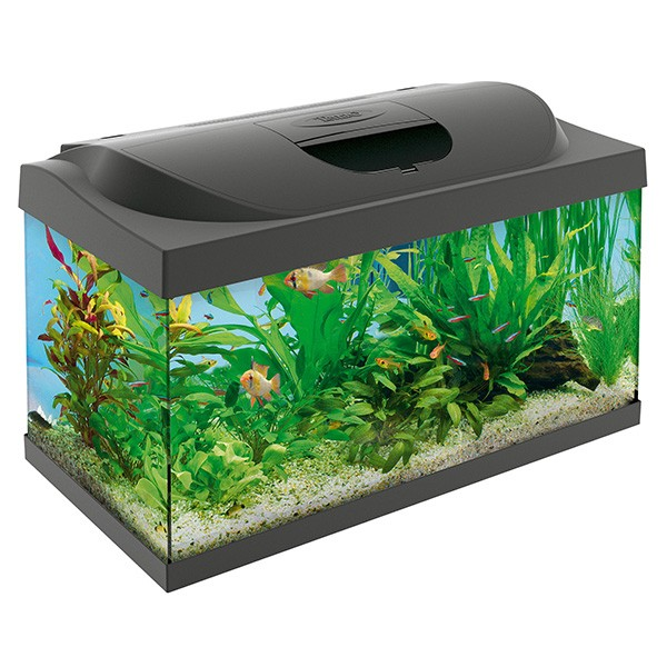 tetra starter line led aquarium waterworld aquatics. Black Bedroom Furniture Sets. Home Design Ideas